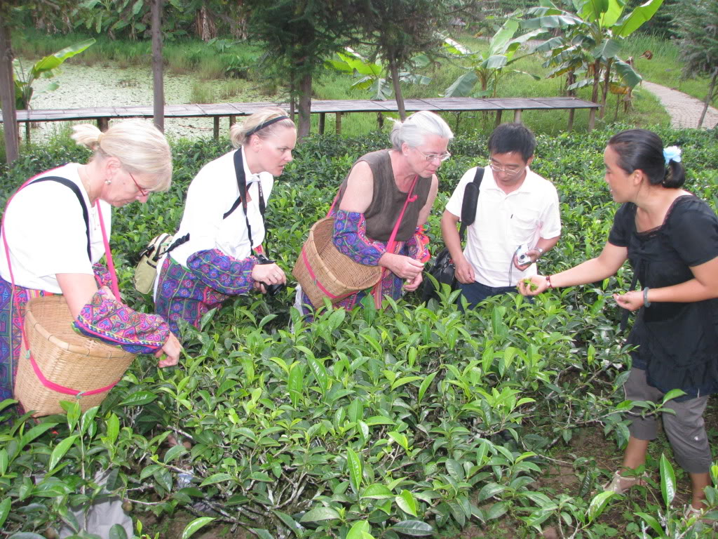 Babette Donaldson picking tea in China
